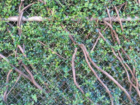 fence: Nature fence Stock Photo