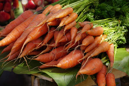 illustration: Carrot