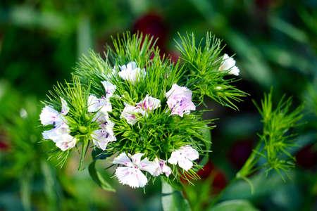 colour: Flower background