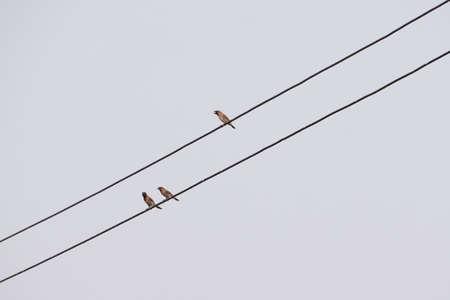wire: Birds on the cable