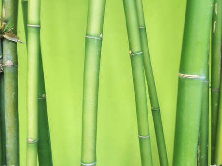 background: Bamboo green background Stock Photo