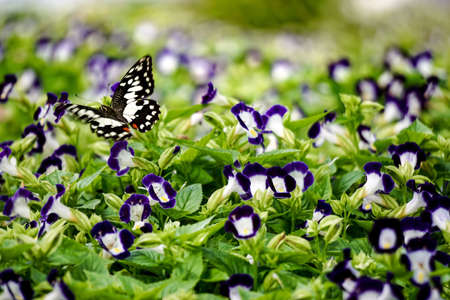 isolated: Butterfly isolated on garden background