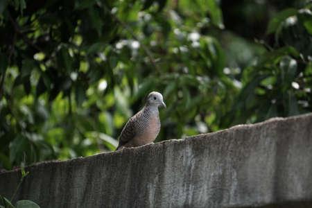 isolated: Bird isolated  on tree background