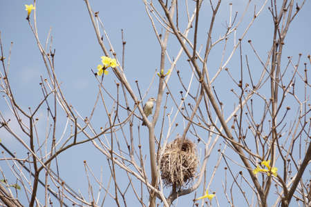 net: Little bird on the yellow flower tree