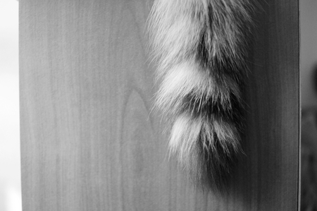 tail: cats tail Stock Photo