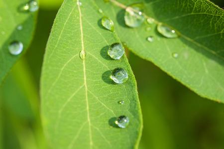 아침이 슬 또는 정원에서 신선한 녹색 잎에 비가 근접