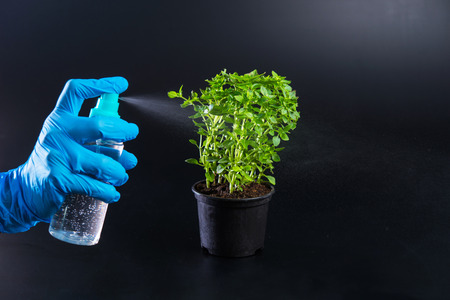 Treatment of plants with various drugs Stock Photo