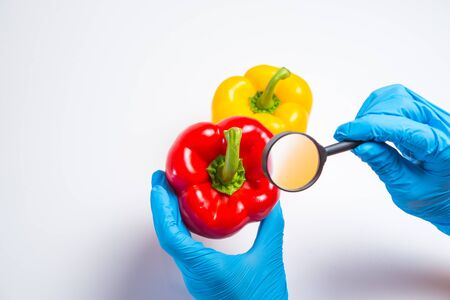 Research of various vegetables in the laboratory on GMOs and harmful substances