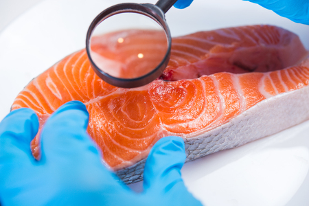 Research of fish in the laboratory on GMOs and harmful substances Banco de Imagens