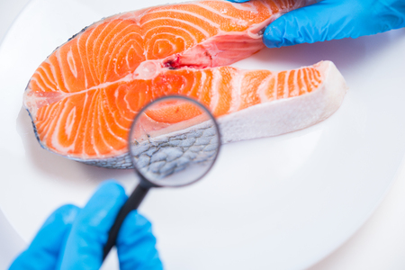 Research of fish in the laboratory on GMOs and harmful substances Stock Photo