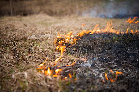The grass burns, the fire, the scorched earth, ecology