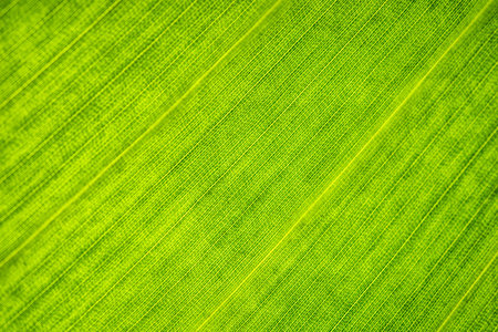 Green leaf close-up. Cell structure. Background or pattern.
