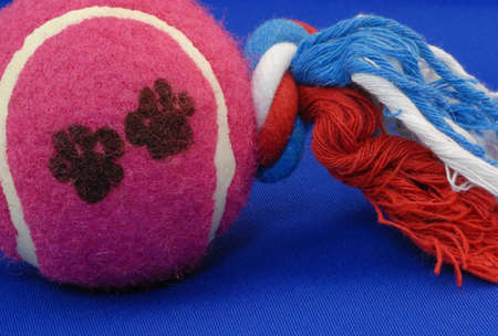 dog ball tug toy on blue background