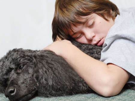 standard poodle: twelve year old boy asleep on standard poodle dog Stock Photo