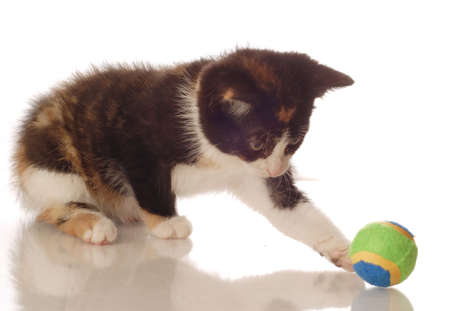 calico kitten playing with a ball - seven weeks old Stock Photo - 3433393