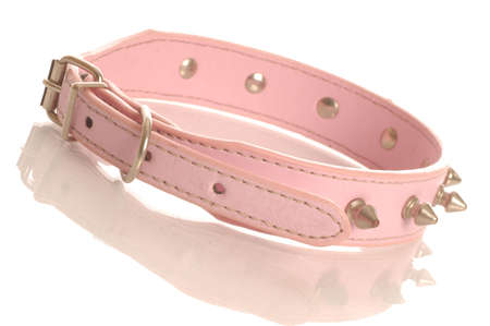 pink leather dog collar with metal studs isolated on white background