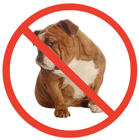 no dogs allowed sign with an annoyed english bulldog as the dog