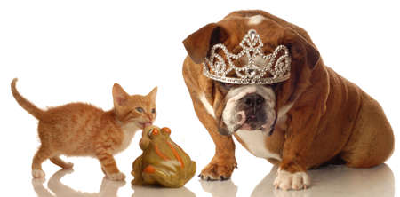 kitten and bulldog set up like concept of fairytale sleeping beauty