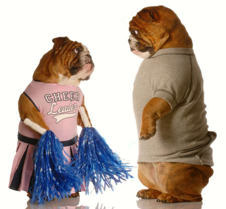 two english bulldogs dressed up as a cheerleader and a jock - puppy love