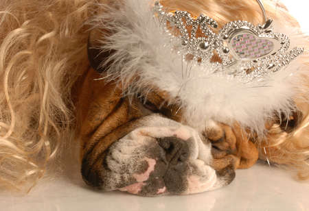 english bulldog dressed up as a princess - dog gone ugly Stock Photo - 4090289
