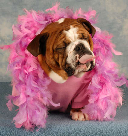spoiled dog with pink boa and tongue sticking out