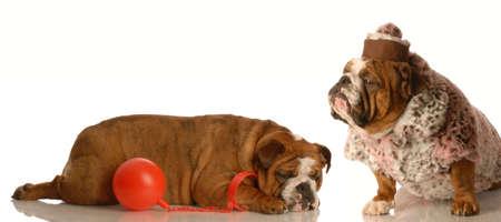 Den Mann auf eine Kugel und Kette - Englisch Bulldogge Liebe zu halten Standard-Bild - 4432331