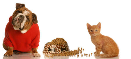 Engels bulldog en delen van voedsel schaaltje kitten