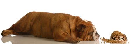 english bulldog laying down sleeping in front of full bowl of food