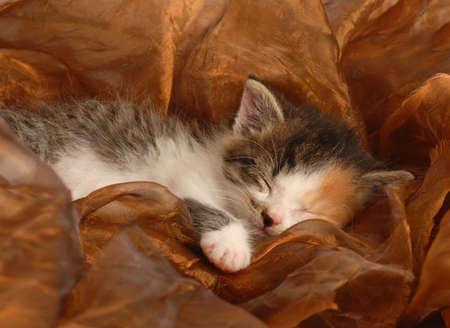 orphaned three week old calico kitten sleeping