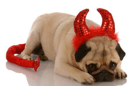 pug dressed up as a devil with guilty expression