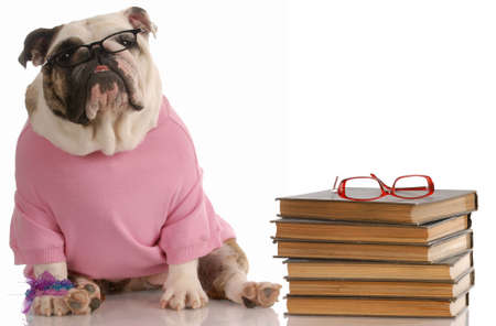 dog obedience school - english bulldog sitting beside a stack of books