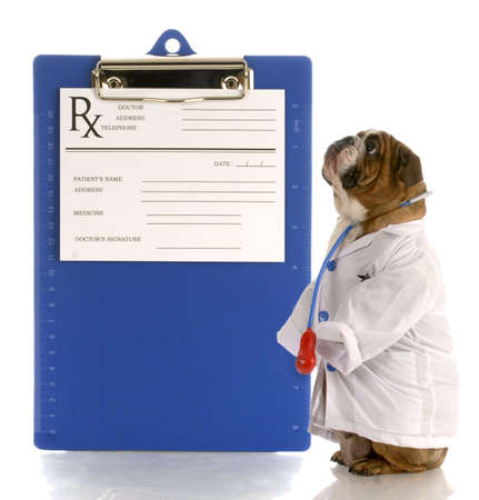 english bulldog dressed up as a doctor or veterinarian with prescription pad Reklamní fotografie