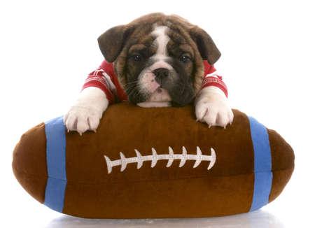 english bulldog puppy wearing red jersey laying on stuffed football photo