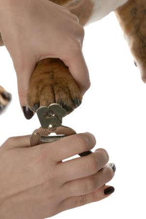 mujer con perro: manos con mascota maquinilla para recortar las u�as de los perros sobre fondo blanco Foto de archivo