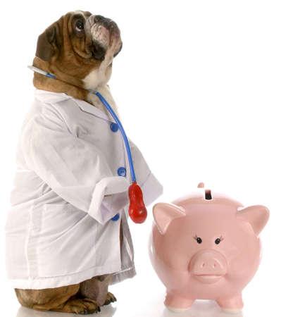 english bulldog doctor standing beside piggy bank photo