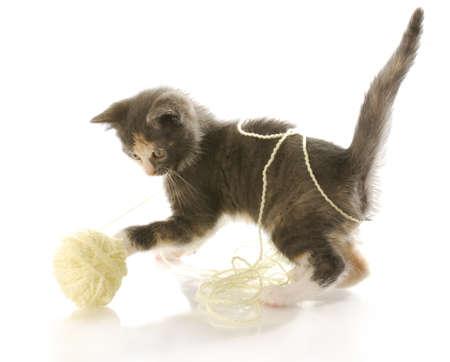 흰색 배경에 리플렉션 사용 하여 노란색 원사의 공을 노는 짧은 머리 새끼 고양이