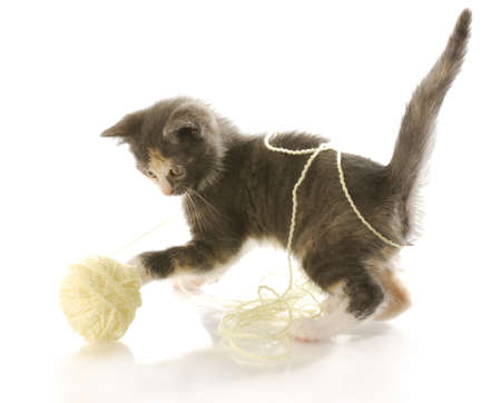 cat toy: short haired kitten playing with ball of yellow yarn with reflection on white background