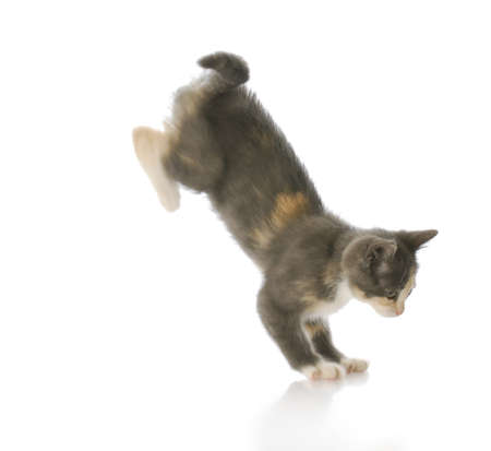 gray cat: cute ten week old kitten jumping down with motion blur