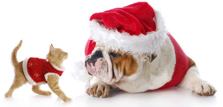 adorable cat and dog dressed up for christmas with reflection on white background photo