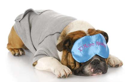english bulldog wearing pajamas and sleeping mask with reflection on white background