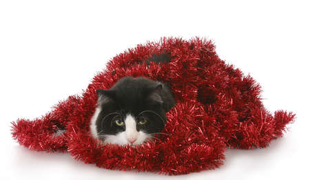 black and white cat playing in red christmas garland