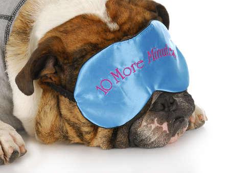 sleep mask: english bulldog wearing sleep mask that says - ten more minutes - with reflection on white background