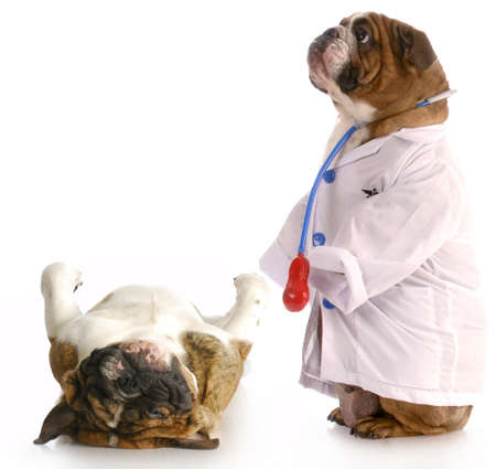 doctor visit: animal obesity - bulldog dressed up as doctor standing beside pug laying down on weigh scales