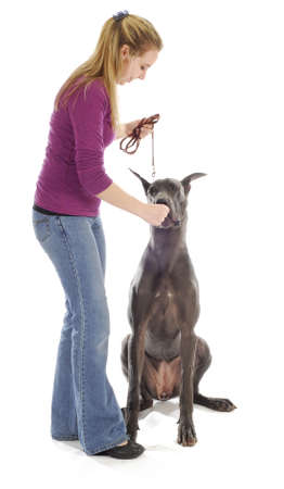dog obedience - woman teach great dane to sit with treats on white background Reklamní fotografie