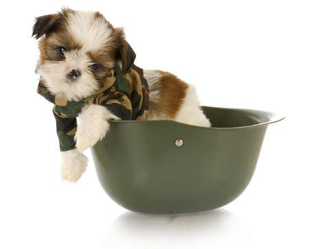 adorable cachorro de shih tzu vistiendo camuflaje sentado en el casco del ejército Foto de archivo
