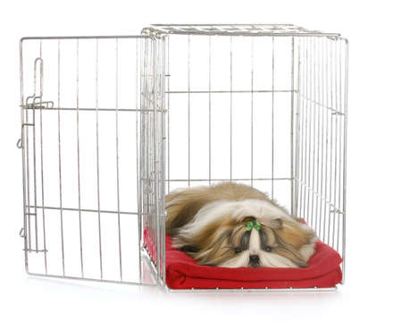 shih tzu puppy laying in open dog crate with reflection on white background Archivio Fotografico