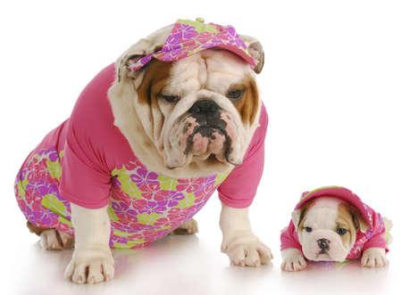 Engels bulldog moeder en puppy dragen matching roze outfits op witte achtergrond