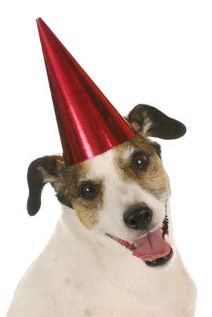 Happy birthday hond - jack russel terrier dragen rode verjaardag hoed op witte achtergrond Stockfoto