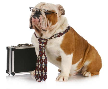 zakelijke hond - Engels bulldog mannen het dragen van stropdas en een bril zat naast koffer