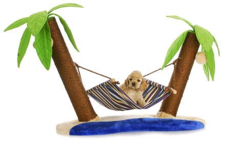 강아지 휴식 - 미국 좋 소 강아지 두 나무 사이 해먹에 누워 - 6 주 오래